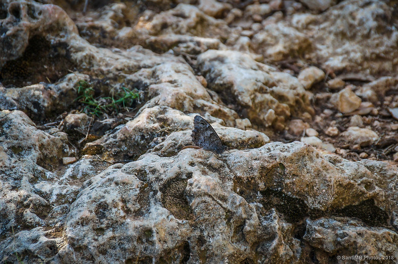 Festón blanco posado en una piedra