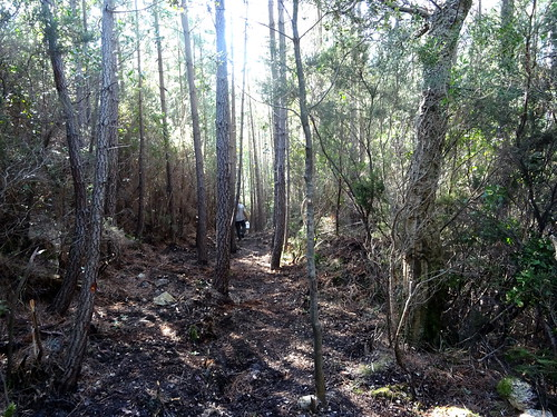 Chemin de Paliri historique : depuis l'extrémité nettoyée vers l'aval