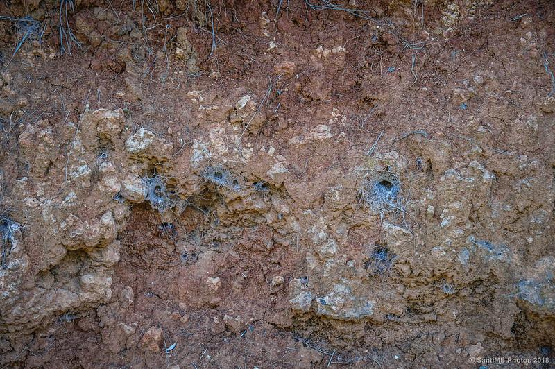 Guaridas de arañas de tierra