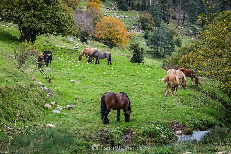 Caballos cerca de la Font de Cabanelles