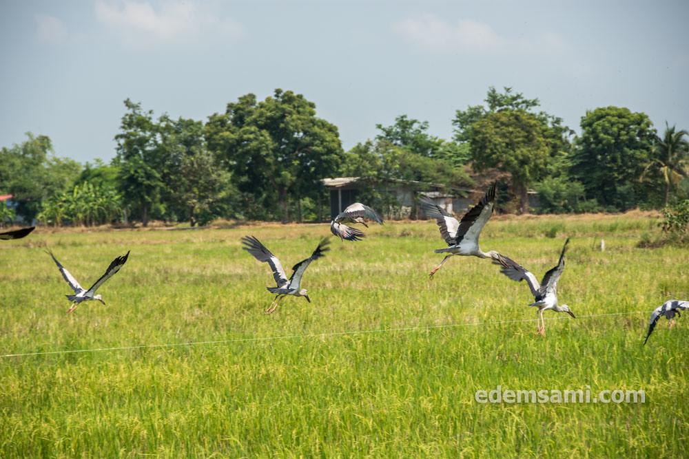 Таиланд Супханбури зоопарк Бынг Чавак