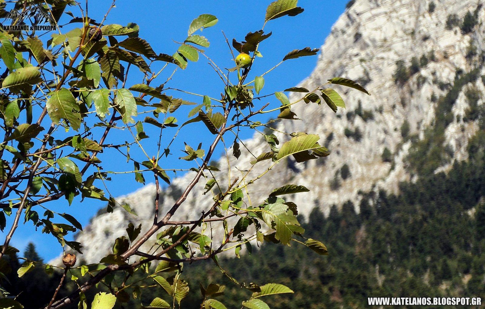 φθινόπωρο ορεινή τριχωνίδα βουνό αη λιάς