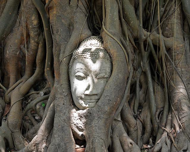 Buda entre las raíces de un árbol en Ayuthaya