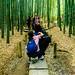 At Bamboo forest of Hokoku-ji Temple in Kamakura : 報国寺の竹林(鎌倉市浄明寺)