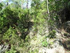 Chemin de Paliri historique : arrivée au 1er ruisseau avec les soutènements en face