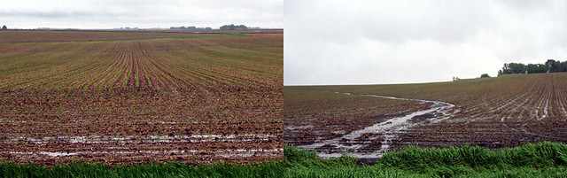 A side by side image of no-till vs conventional tillage