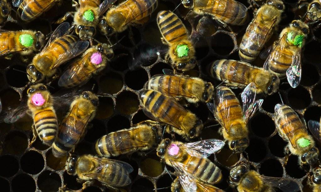 圖片來源:Vivian Abagiu/College of Natural Sciences at University of Texas in Austin