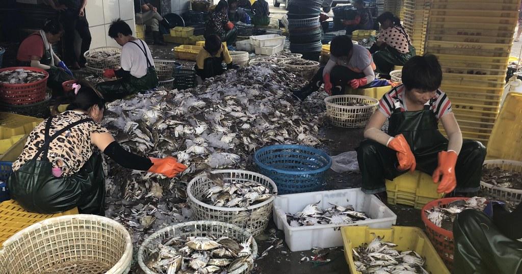 江蘇省啟東市吕泗镇水產路的一家海產店工人正在整理運上岸的梭子蟹。攝影:康寧