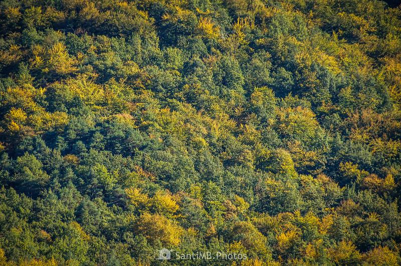 Bosque de la cara norte de la Serra del Corb adquiriendo los colores del otoño