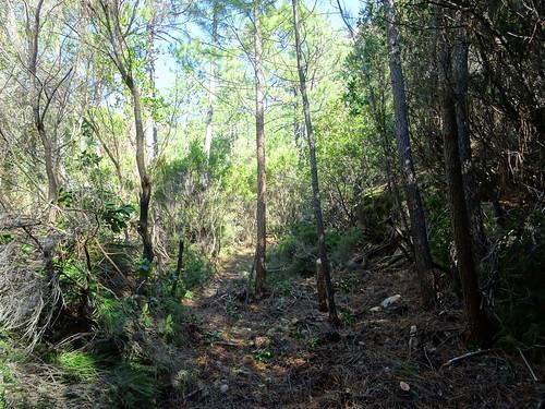 Chemin de Paliri historique : depuis l'extrémité nettoyée vers l'amont