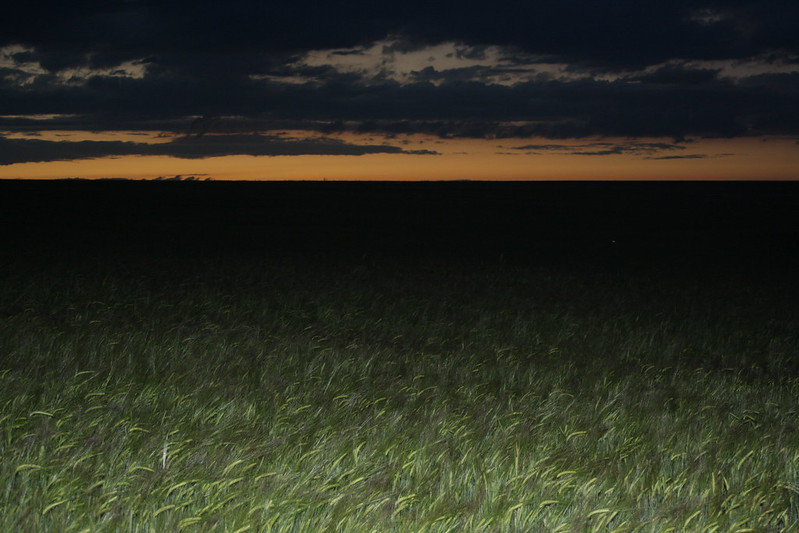 Ночная природа в деревне