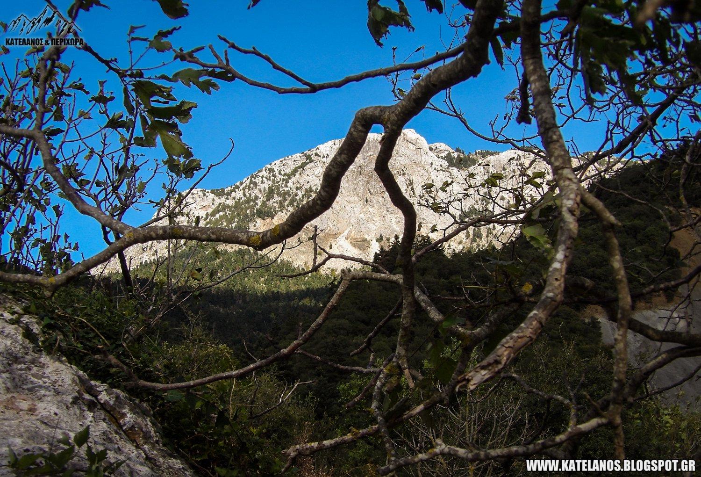 ορεινές καρυδιές δέντρα βουνό