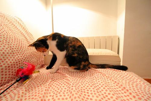 Yaiza, gatita tricolor guapísima y dulce esterilizada, nacida en Abril´18, en adopción. Valencia. ADOPTADA. 45104071231_fc755299f6
