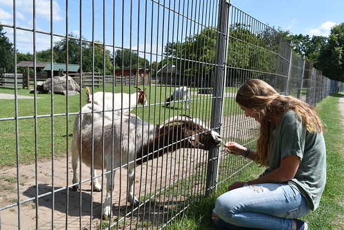 A student feeds a goat