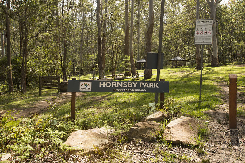 Blue Gum Walk starts from Hornsby park