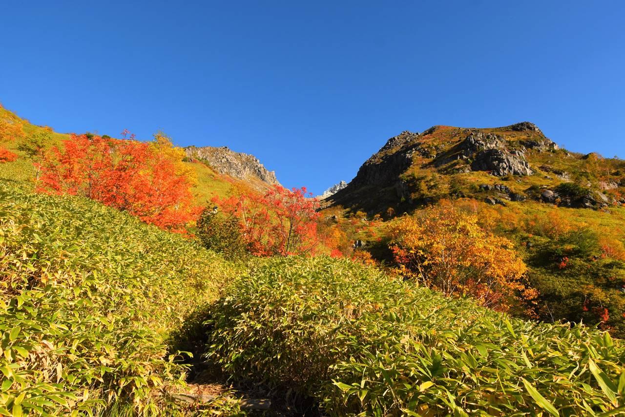 焼岳と紅葉