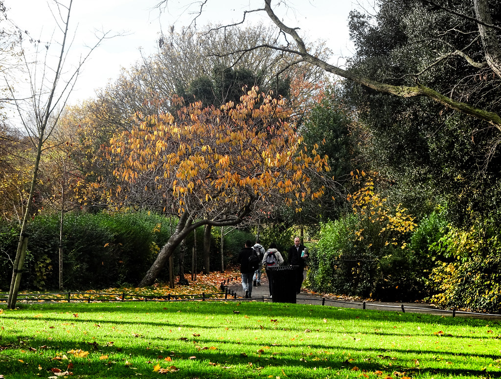 ST. STEPHEN'S GREEN IN AUTUMN 001
