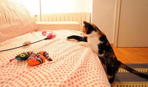 Yaiza, gatita tricolor guapísima y dulce esterilizada, nacida en Abril´18, en adopción. Valencia. ADOPTADA. 45054900022_4650964513