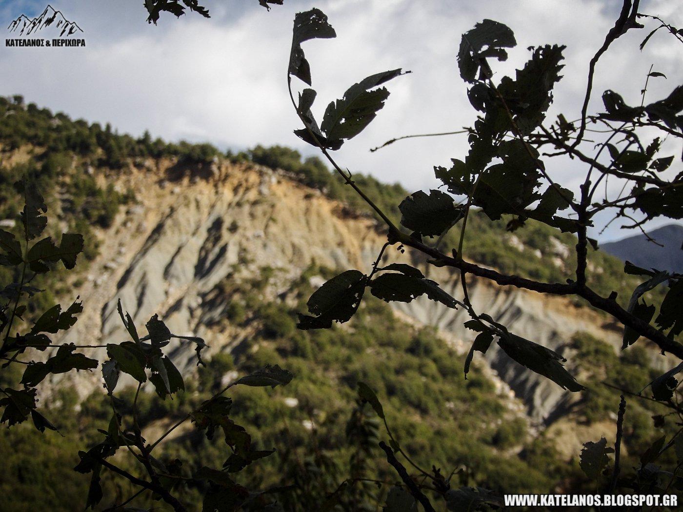 σκαλτίνα ορεινής τριχωνίδος