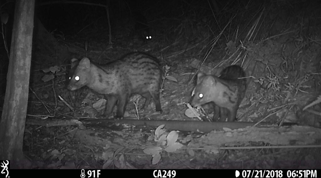 田鱉米田區淺山動物紀錄。圖片來源:觀察家生態顧問有限公司