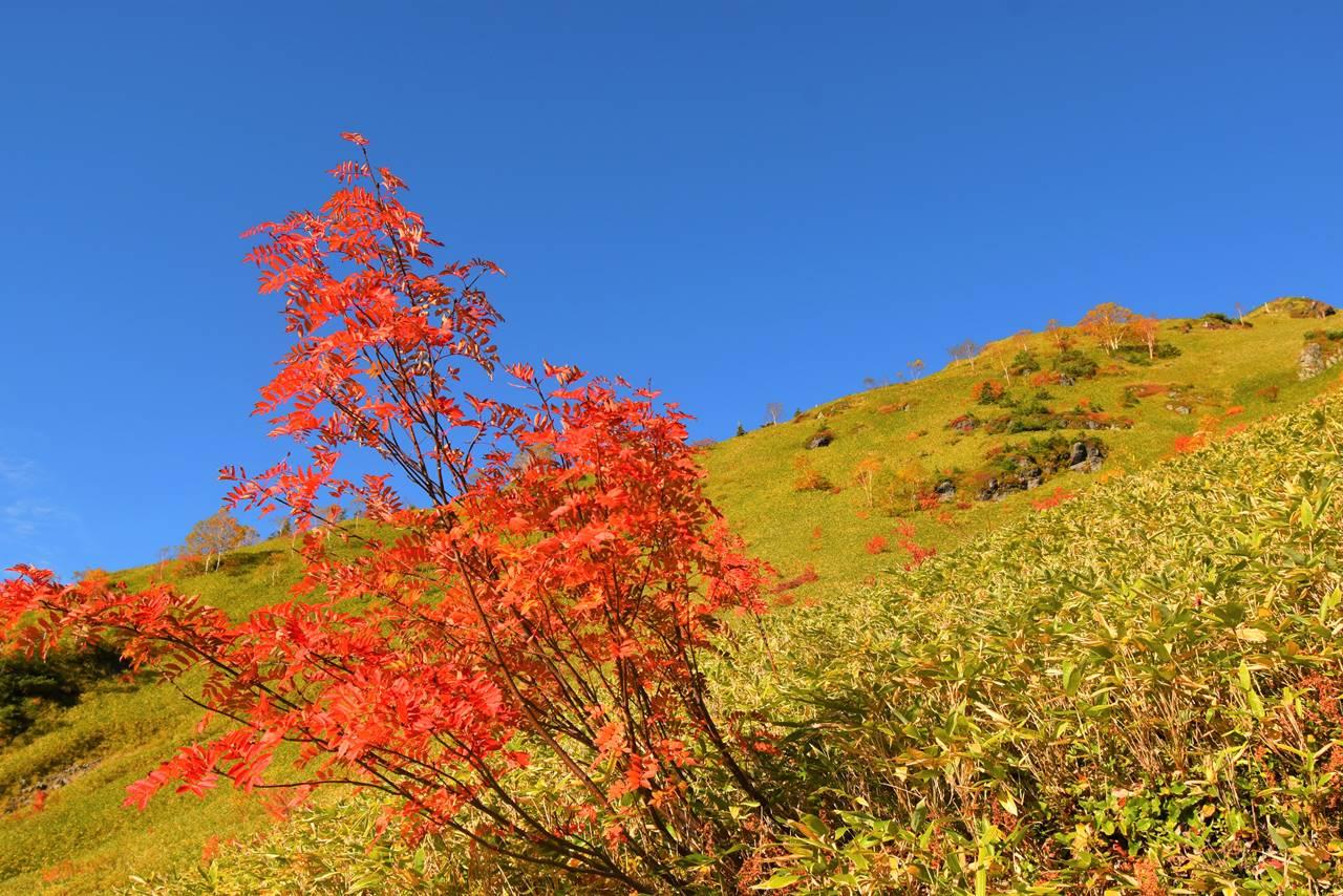 北アルプスの紅葉