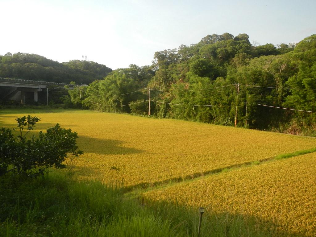 田鱉米田地與周邊環境。圖片來源:觀察家生態顧問有限公司