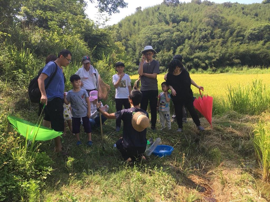 田鱉米環境教育。圖片來源:觀察家生態顧問有限公司
