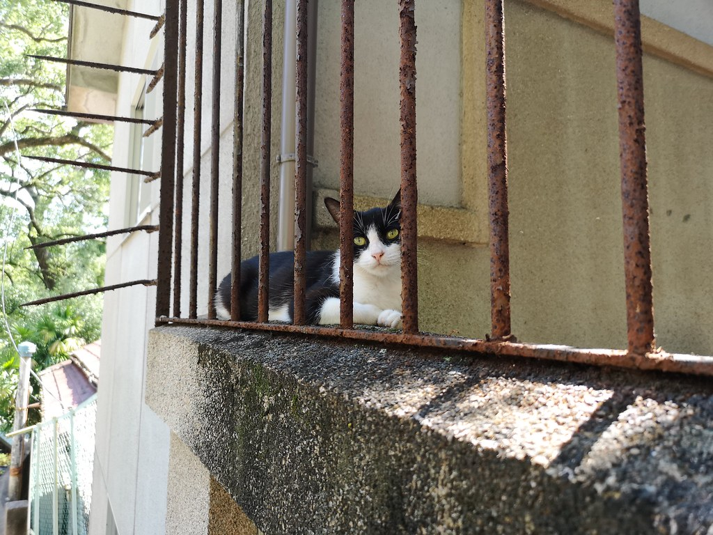 The only kitty we managed to spot in the cat alley on the sweltering day spent in Onomichi.