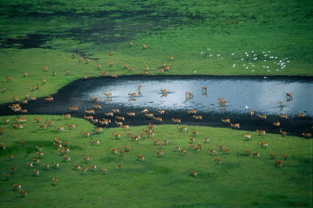 圖片來源:Sarah Black / WWF