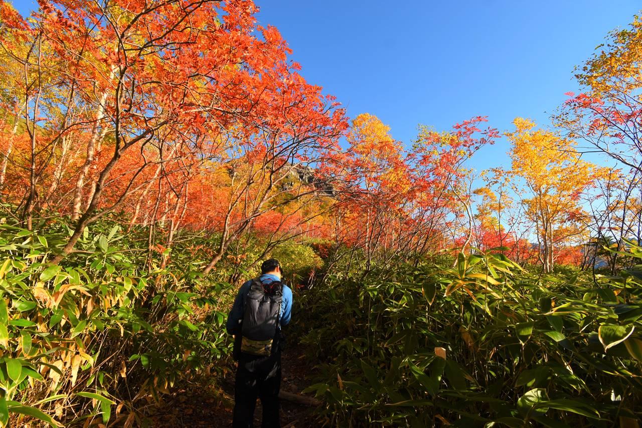 北アルプス焼岳 紅葉の登山道