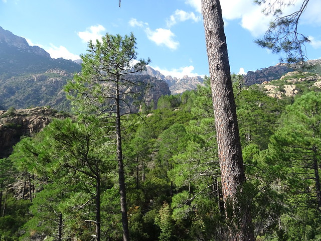 Chemin de Paliri historique : extrémité du démaquisage du jour avec la plate-forme atteinte et la vue sur le fond de vallée