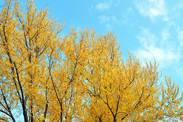 November 2018 Bad Rappenau ... herbstlich verfärbte Bäume - Lichterturm - Salinensteg - Salinenpark - Feuerbeet - Monopteros - Landesgartenschau 2008 - Fotos: Brigitte Stolle 2018