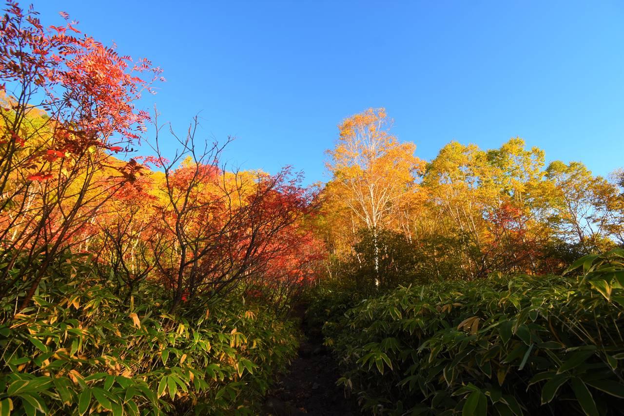 焼岳・新中の湯ルート登山道の紅葉