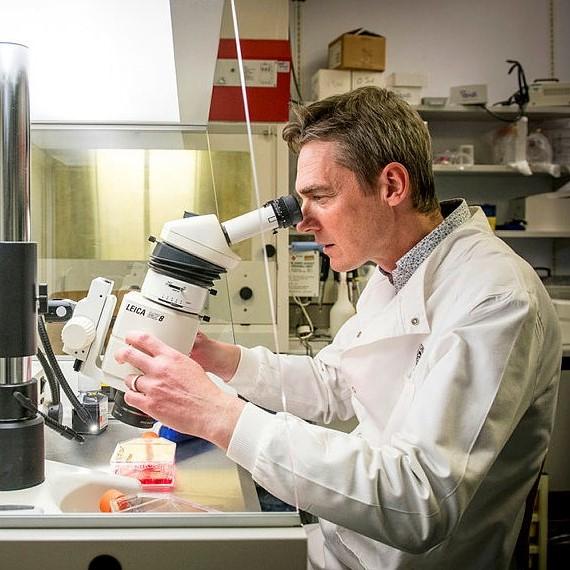研究人员使用显微镜的照片