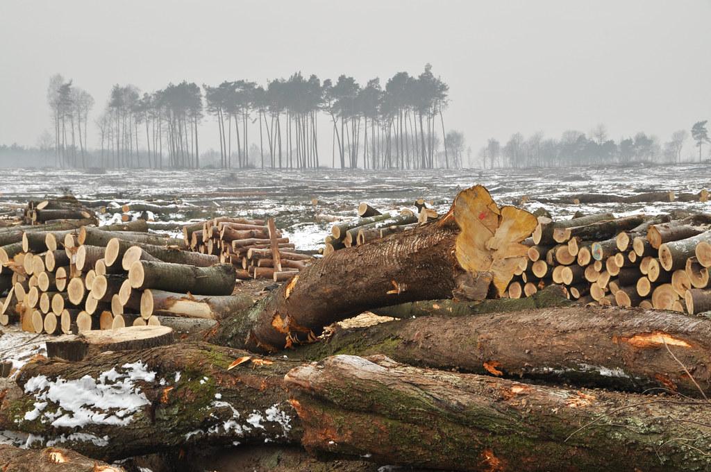圖片來源:Shutterstock / wawritto / WWF