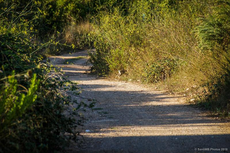 Un conejo saltando fuera del camino