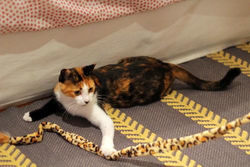 Yaiza, gatita tricolor guapísima y dulce esterilizada, nacida en Abril´18, en adopción. Valencia. ADOPTADA. 45104122881_7e946422cc