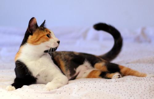 Yaiza, gatita tricolor guapísima y dulce esterilizada, nacida en Abril´18, en adopción. Valencia. ADOPTADA. 30166078717_2e5b6decff