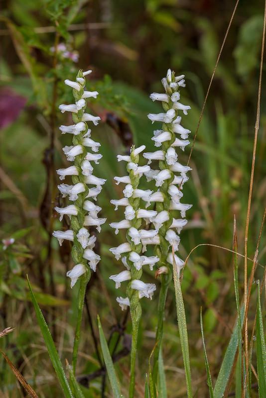 Spectacular Wildflower Display On The Blue Ridge Parkway North Carolina 2018 09 22 Jim S Nature Blog