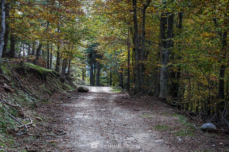 GR-4 por el Bosc de Cal Serra
