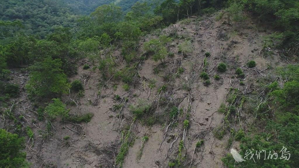 975-2-07台東林管處也承認,林務局的疏伐作業已停滯三十年,這次的作業的確有一些粗糙。