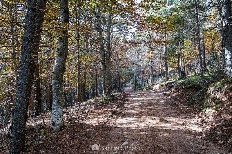 Bosque mixto cerca de la Roca del Catllaràs