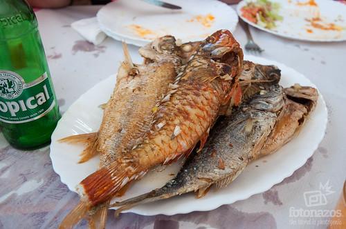 Bar David, especialidad en pescado fresco en Castillo del Romeral, Gran Canaria