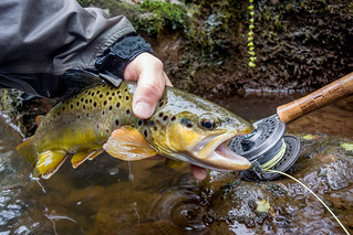 Photo of Man holding brown trout
