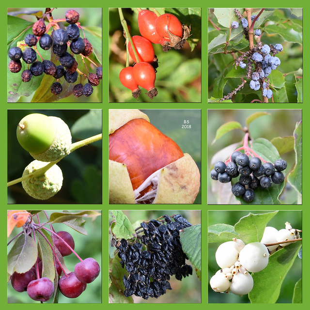 September 2018 ... Schlossgarten Neckarhausen ... Orangerie, Blüten, Herbstfrüchte, Septemberfrüchte ... Foto(s): Brigitte Stolle