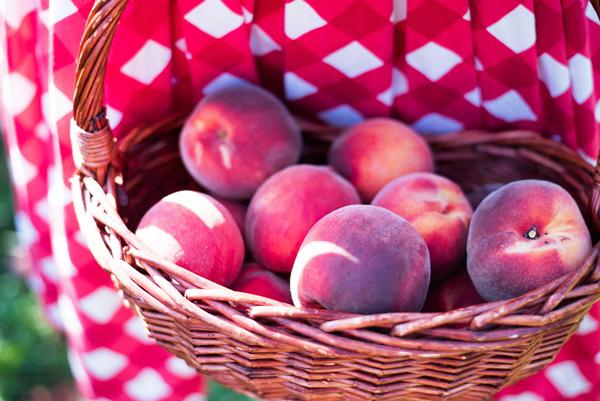 peaches nectarines rochester ny