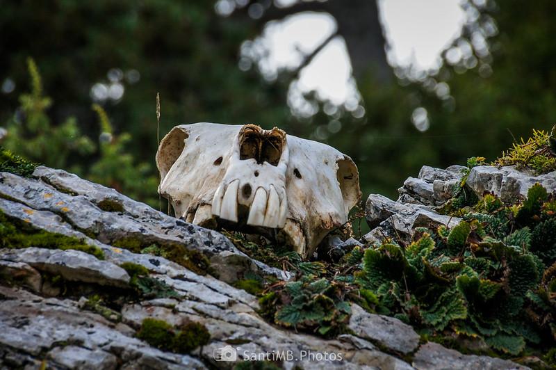 Cráneo de caballo en la Roca del Catllaràs