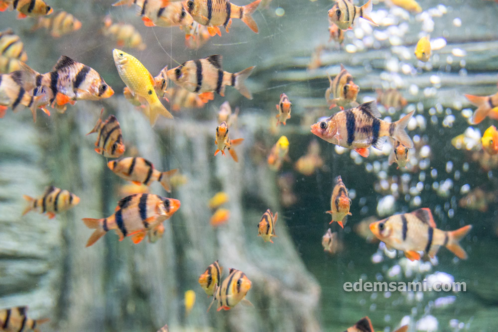 Таиланд Супханбури аквариум Бынг Чавак