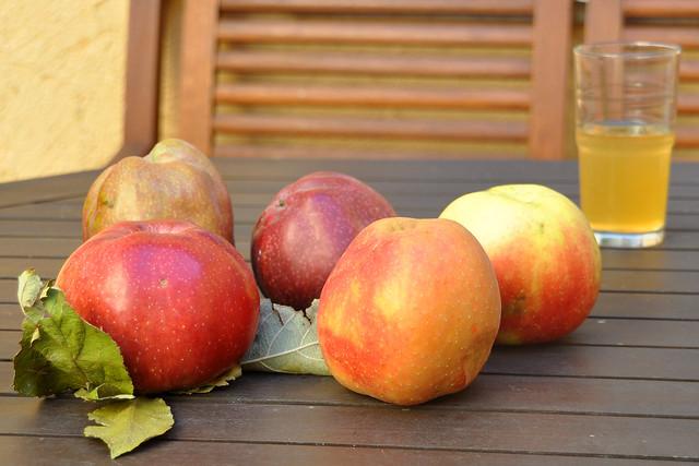 Apfelmus, Apfelbrei, Apfelpüree - ungespritzte Äpfel von der Streuobstwiese - Apfelsaft, Vanilleschote, Zimtstange --- Fotos: Brigitte Stolle