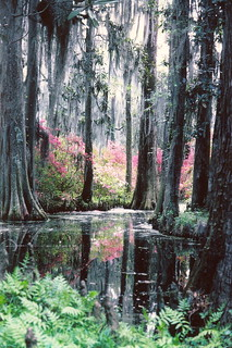 Cypress Gardens  1978 | by snow41